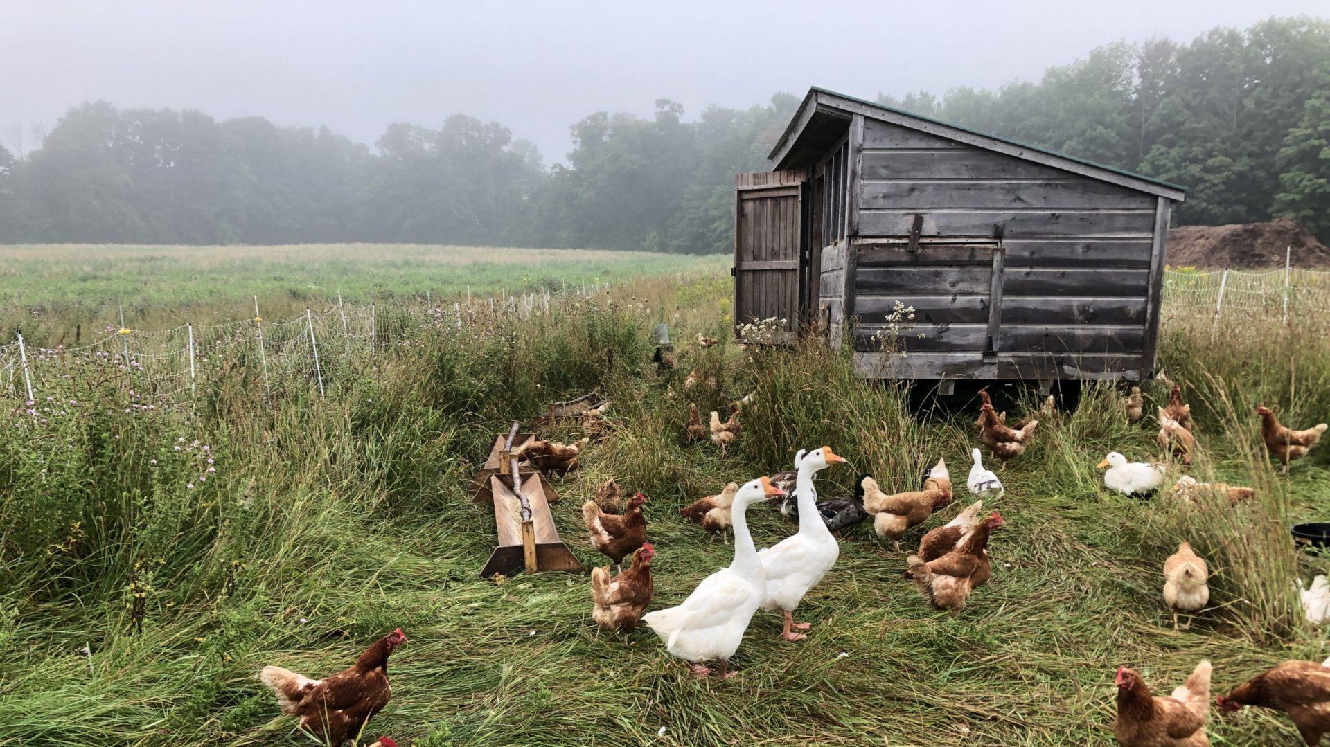Jackson Regenerational Farm